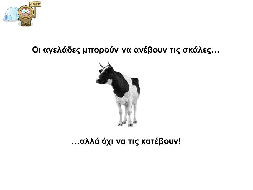 Οι αγελάδες μπορούν να ανέβουν τις σκάλες… …αλλά όχι να τις κατέβουν!