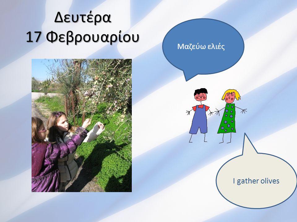 Δευτέρα 17 Φεβρουαρίου Μαζεύω ελιές I gather olives