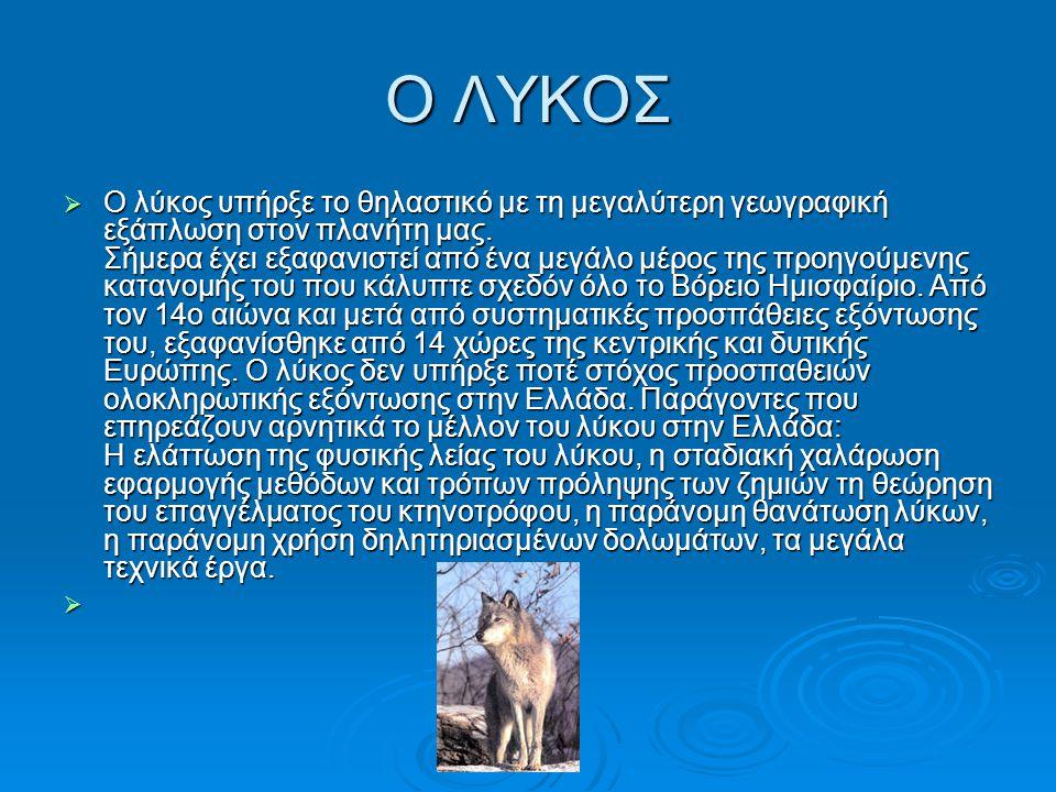 Ο ΛΥΚΟΣ ΟΟΟΟ λύκος υπήρξε το θηλαστικό με τη μεγαλύτερη γεωγραφική εξάπλωση στον πλανήτη μας.