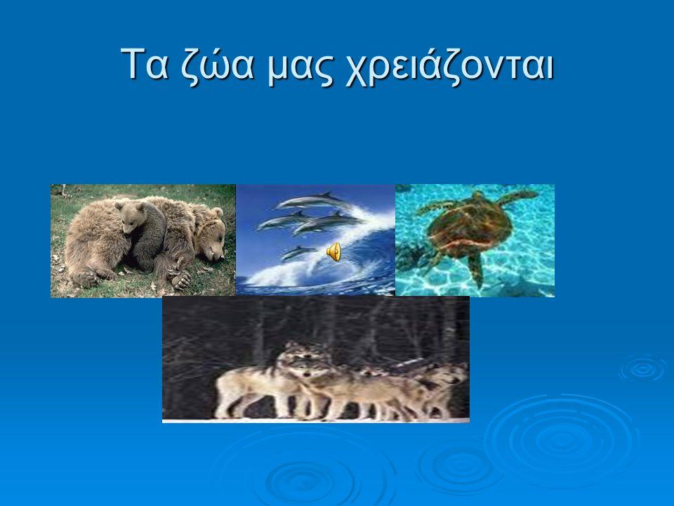 Ο ΛΥΚΟΣ ΟΟΟΟ λύκος υπήρξε το θηλαστικό με τη μεγαλύτερη γεωγραφική εξάπλωση στον πλανήτη μας. Σήμερα έχει εξαφανιστεί από ένα μεγάλο μέρος της προ