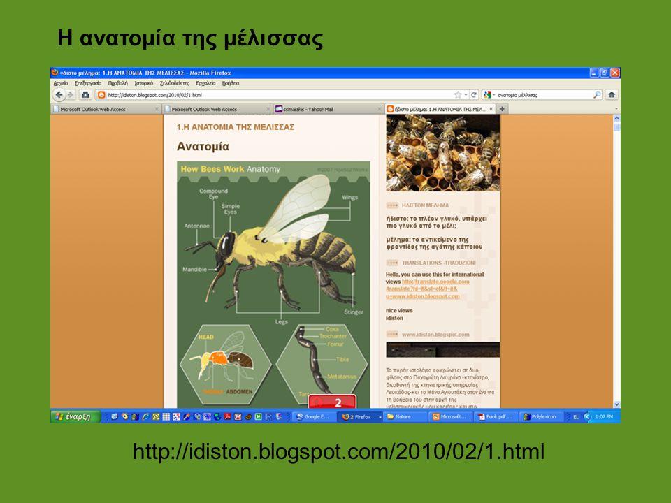 http://idiston.blogspot.com/2010/02/1.html Η ανατομία της μέλισσας