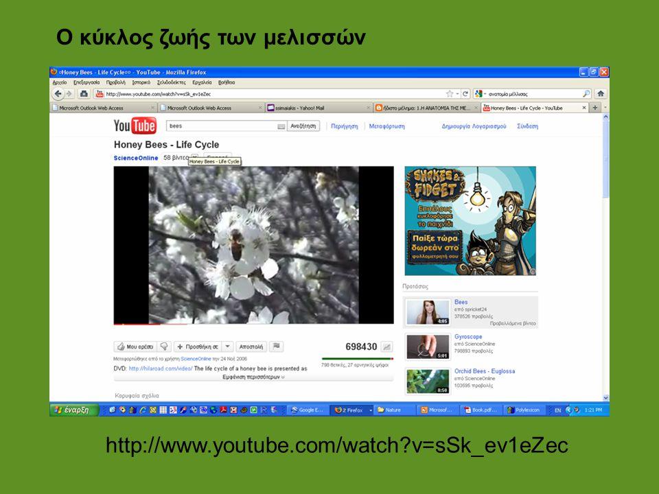 http://www.youtube.com/watch?v=sSk_ev1eZec Ο κύκλος ζωής των μελισσών