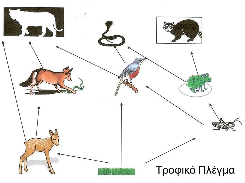 Αλεπού http://el.wikipedia.org/wiki/αλεπού Λύκος http://el.wikipedia.org/wiki/λύκος Φίδι http://el.wikipedia.org/wiki/φίδι Ελάφι http://el.wikipedia.org/wiki/ελάφι Εκθέματα στο Μουσείο Φυσικής Ιστορίας Κρήτης για το ρόλο της αλεπούς, του λύκου, του φιδιού και του ελαφιού στα μεσογειακά οικοσυστήματα