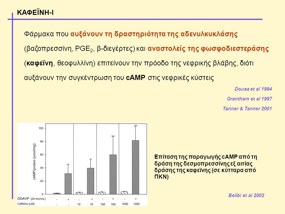 Φάρμακα που αυξάνουν τη δραστηριότητα της αδενυλκυκλάσης (βαζοπρεσσίνη, PGE 2, β-διεγέρτες) και αναστολείς της φωσφοδιεστεράσης (καφεϊνη, θεοφυλλίνη) επιτείνουν την πρόοδο της νεφρικής βλάβης, διότι αυξάνουν την συγκέντρωση του cAMP στις νεφρικές κύστεις Dousa et al 1994 Grantham et al 1997 Tanner & Tanner 2001 ΚΑΦΕΪΝΗ-Ι Belibi et al 2002 Επίταση της παραγωγής cAMP από τη δράση της δεσμοπρεσσίνης εξ αιτίας δράσης της καφεϊνης (σε κύτταρα από ΠΚΝ)