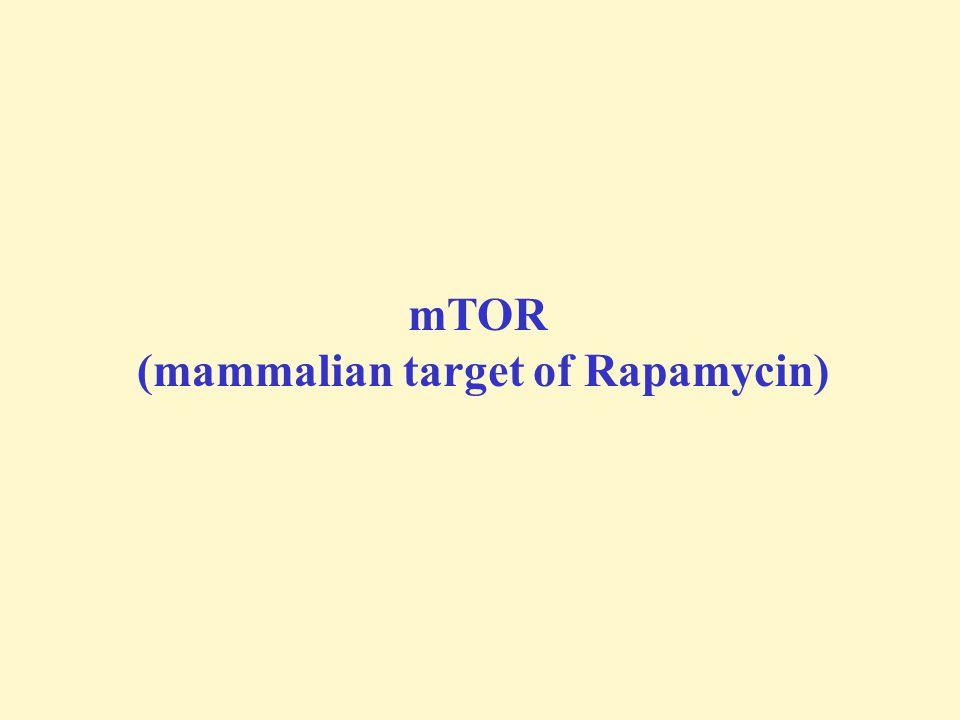 mTOR (mammalian target of Rapamycin)