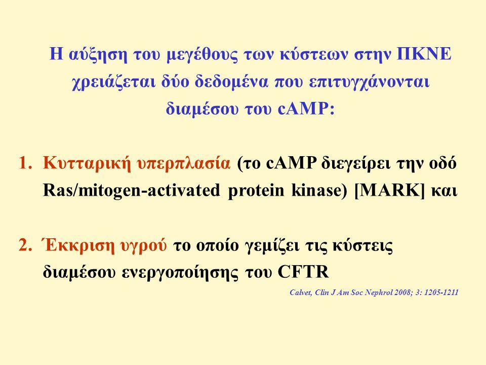 Η αύξηση του μεγέθους των κύστεων στην ΠΚΝΕ χρειάζεται δύο δεδομένα που επιτυγχάνονται διαμέσου του cAMP: 1.Κυτταρική υπερπλασία (το cAMP διεγείρει την οδό Ras/mitogen-activated protein kinase) [MARK] και 2.Έκκριση υγρού το οποίο γεμίζει τις κύστεις διαμέσου ενεργοποίησης του CFTR Calvet, Clin J Am Soc Nephrol 2008; 3: 1205-1211