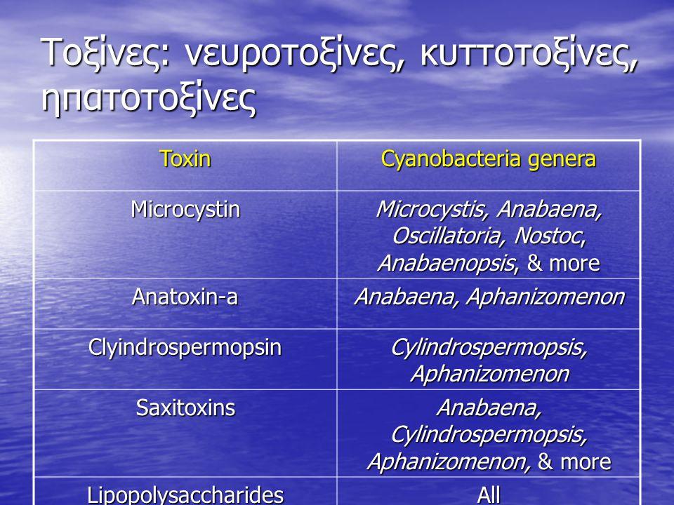 Τοξίνες: νευροτοξίνες, κυττοτοξίνες, ηπατοτοξίνες Toxin Cyanobacteria genera Microcystin Microcystis, Anabaena, Oscillatoria, Nostoc, Anabaenopsis, &