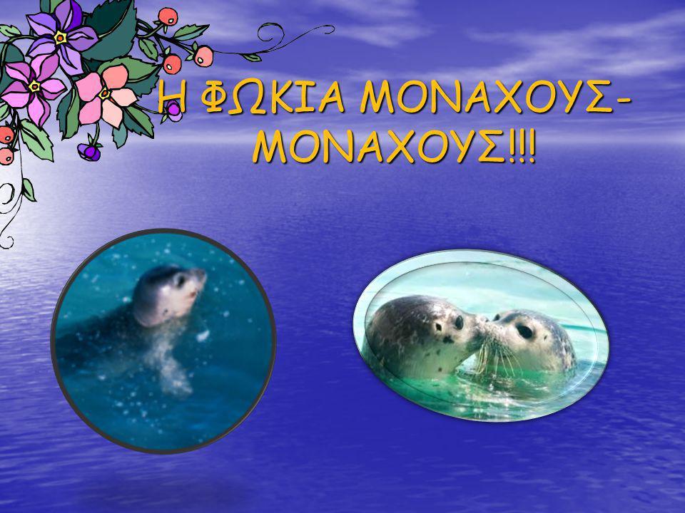 Η ΦΩΚΙΑ ΜΟΝΑΧΟΥΣ- ΜΟΝΑΧΟΥΣ!!!