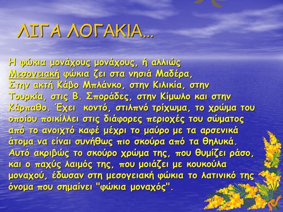 ΛΙΓΑ ΛΟΓ ΑΚΙΑ … Η φώκια μονάχους μονάχους, ή αλλιώς Μεσογειακή φώκια ζει στα νησιά Μαδέρα, Στην ακτή Κάβο Μπλάνκο, στην Κιλικία, στην Τουρκία, στις Β.