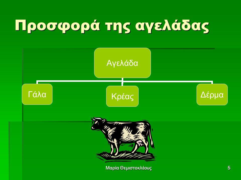 Μαρία Θεμιστοκλέους5 Προσφορά της αγελάδας Αγελάδα ΓάλαΚρέαςΔέρμα