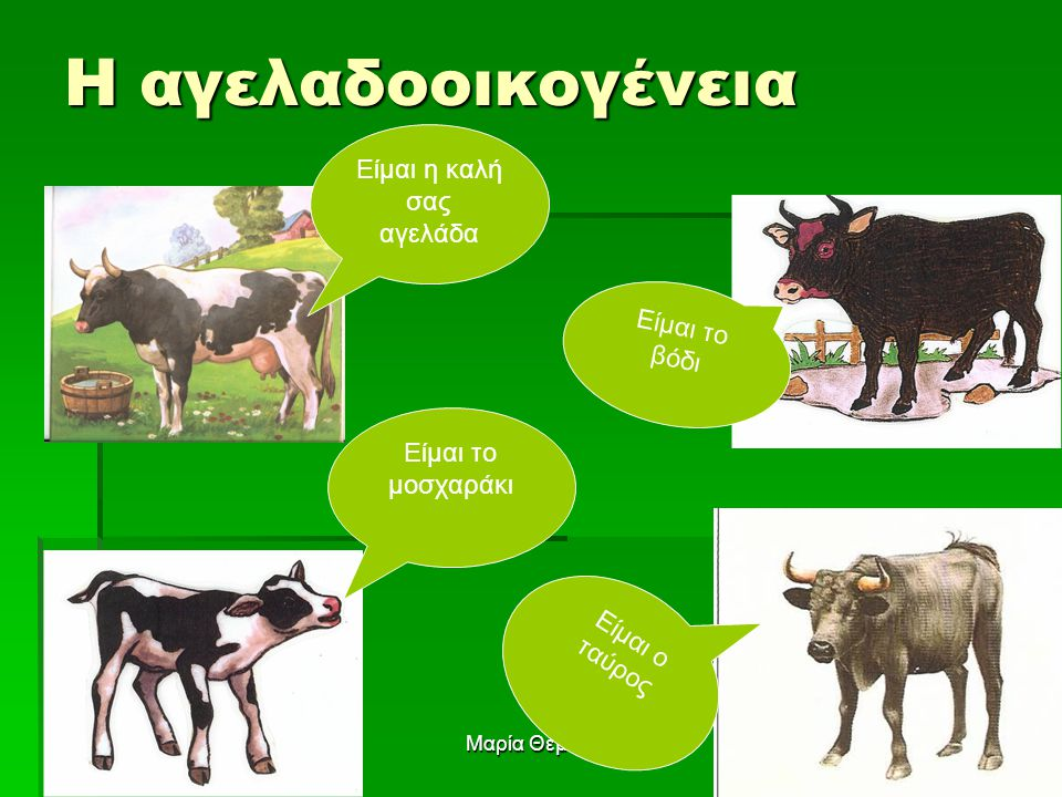 Μαρία Θεμιστοκλέους7 Η αγελαδοοικογένεια Είμαι το μοσχαράκι Ε ί μ α ι ο τ α ύ ρ ο ς Είμαι η καλή σας αγελάδα Είμαι το βόδι