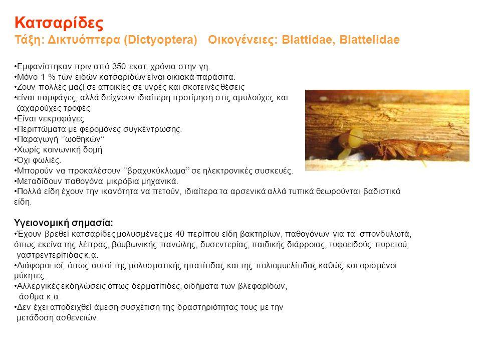 Κατσαρίδες Τάξη: Δικτυόπτερα (Dictyoptera) Οικογένειες: Blattidae, Blattelidae •Εμφανίστηκαν πριν από 350 εκατ. χρόνια στην γη. •Μόνο 1 % των ειδών κα