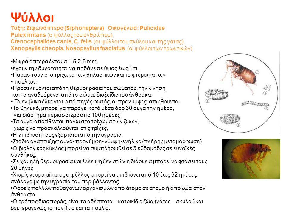 Ψύλλοι Τάξη: Σιφωνάπτερα (Siphonaptera) Οικογένεια: Pulicidae Pulex irritans (ο ψύλλος του ανθρώπου), Ctenocephalides canis, C. felis (οι ψύλλοι του σ