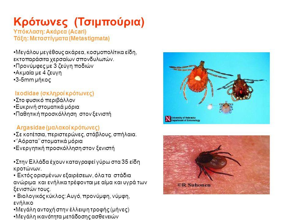 Κρότωνες (Τσιμπούρια) Υπόκλαση: Ακάρεα (Acari) Τάξη: Μεταστίγματα (Metastigmata) •Μεγάλου μεγέθους ακάρεα, κοσμοπολίτικα είδη, εκτοπαράσιτα χερσαίων σ