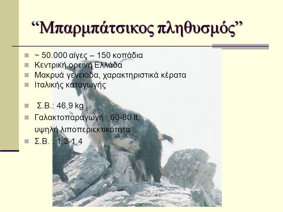 """""""Μπαρμπάτσικος πληθυσμός""""  ~ 50.000 αίγες – 150 κοπάδια  Κεντρική ορεινή Ελλάδα  Μακρυά γενειάδα, χαρακτηριστικά κέρατα  Ιταλικής καταγωγής  Σ.Β."""