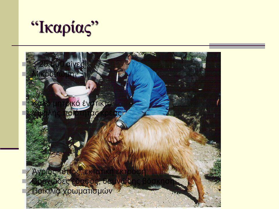 """""""Ικαρίας""""  ~ 25.000 αίγες  Μικρόσωμη  Καλό μητρικό ένστικτο  Υψηλής ποιότητας κρέας  Άγριος τύπος, εκτατική εκτροφή  Βραχώδες έδαφος, θαμνώδης β"""