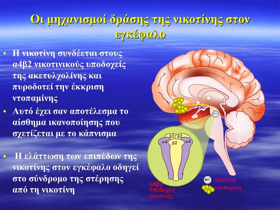 Σωματική εξάρτηση •Η νικοτίνη ενεργοποιεί την έκλυση ντοπαμίνης στον εγκέφαλο, με αποτέλεσμα το αίσθημα ικανοποίησης και επιβράβευσης Ψυχολογική εξάρτηση •Eξωτερικά ερεθίσματα παίζουν σημαντικό ρόλο στην ενίσχυση της εξάρτησης από την νικοτίνη Σωματική και ψυχολογική εξάρτηση από το κάπνισμα