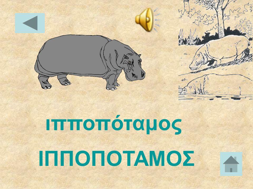 ΘΑΛΑΣΣΙΟΣ ΕΛΕΦΑΝΤΑΣ θαλάσσιος ελέφαντας