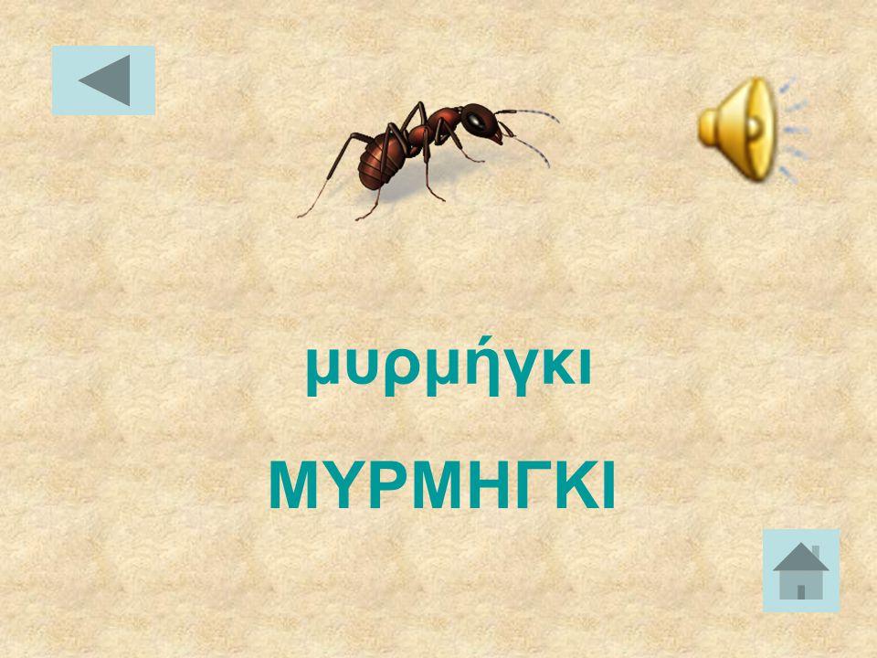 ΜΕΛΙΣΣΑ μέλισσα