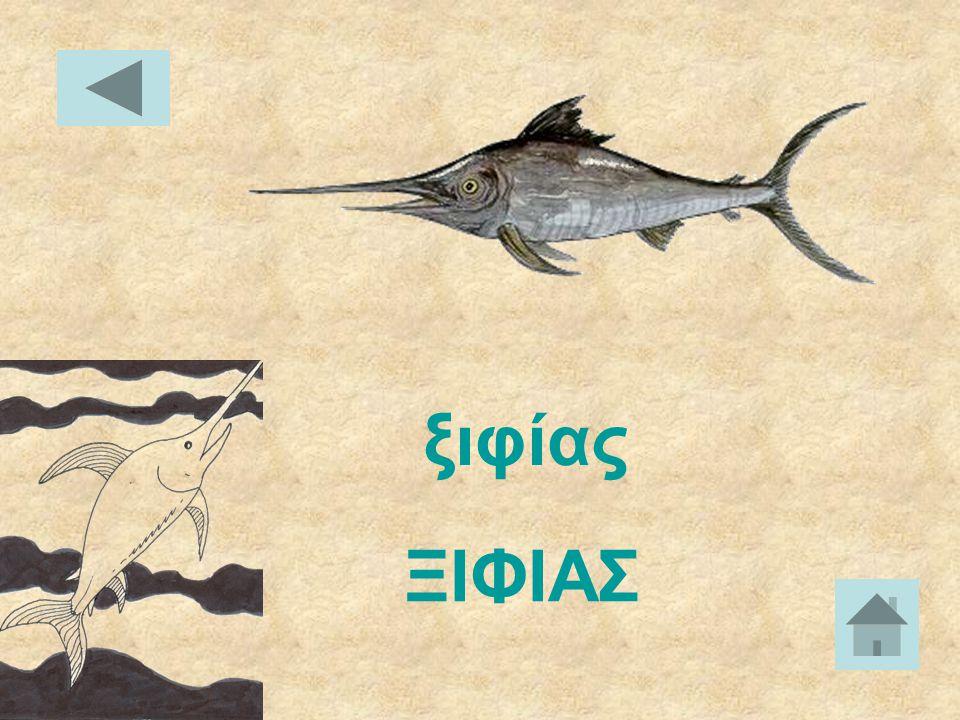 ΝΕΡΟΦΙΔΟ νερόφιδο