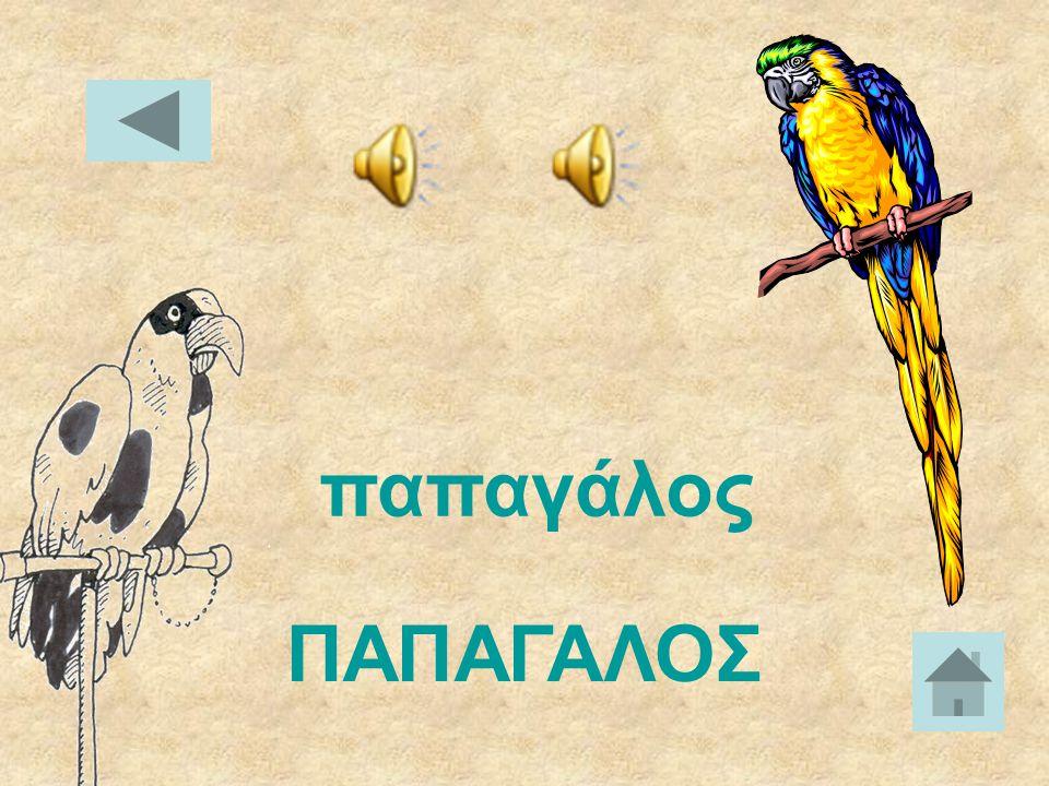 πεταλούδα ΠΕΤΑΛΟΥΔΑ