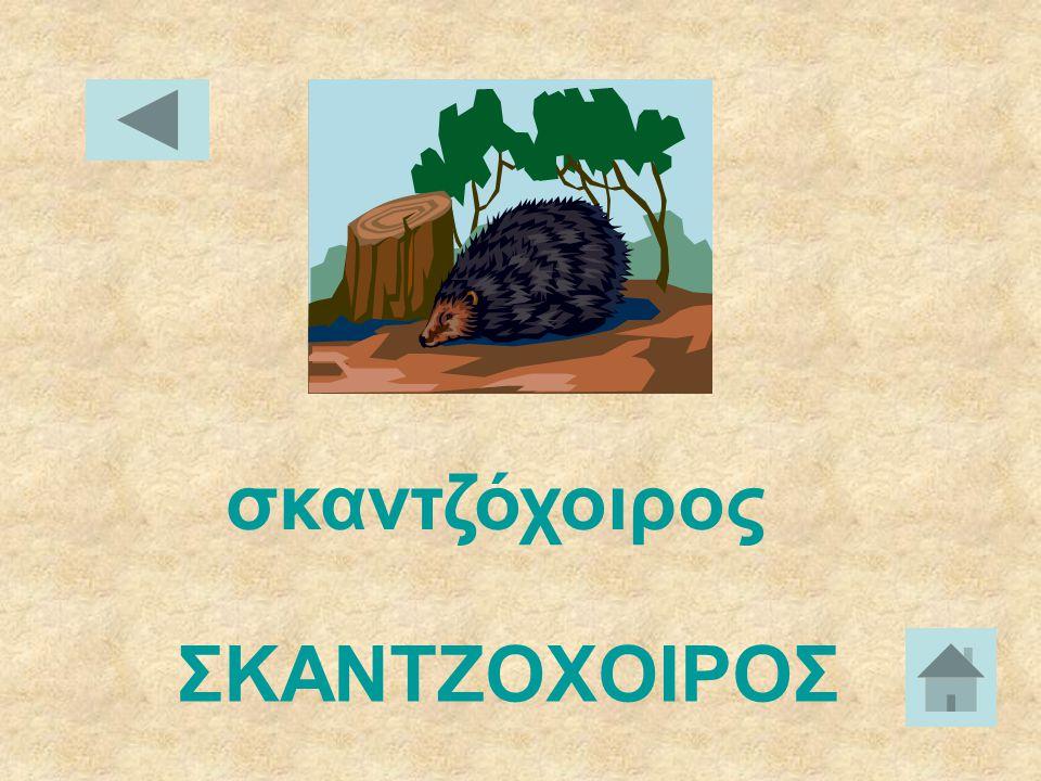 σκίουρος ΣΚΙΟΥΡΟΣ