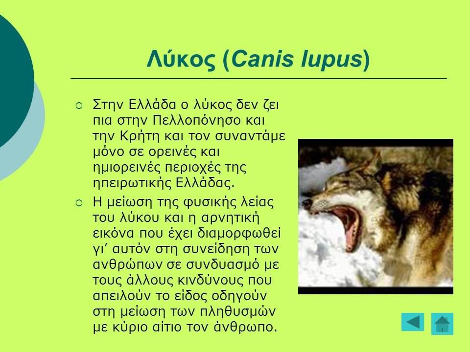 Λύκος (Canis lupus)  Στην Ελλάδα ο λύκος δεν ζει πια στην Πελλοπόνησο και την Κρήτη και τον συναντάμε μόνο σε ορεινές και ημιορεινές περιοχές της ηπε