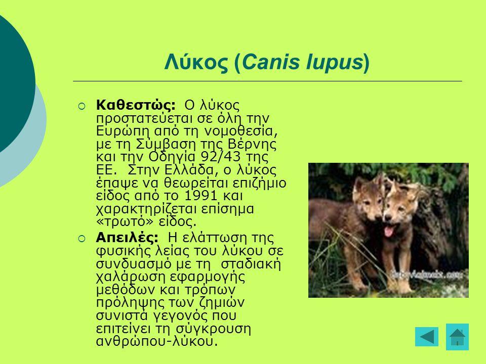 Λύκος (Canis lupus)  Καθεστώς: Ο λύκος προστατεύεται σε όλη την Ευρώπη από τη νομοθεσία, με τη Σύμβαση της Βέρνης και την Οδηγία 92/43 της ΕΕ. Στην Ε