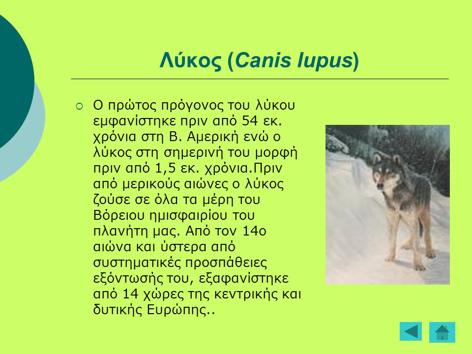 Λύκος (Canis lupus)  Ο πρώτος πρόγονος του λύκου εμφανίστηκε πριν από 54 εκ. χρόνια στη Β. Αμερική ενώ ο λύκος στη σημερινή του μορφή πριν από 1,5 εκ