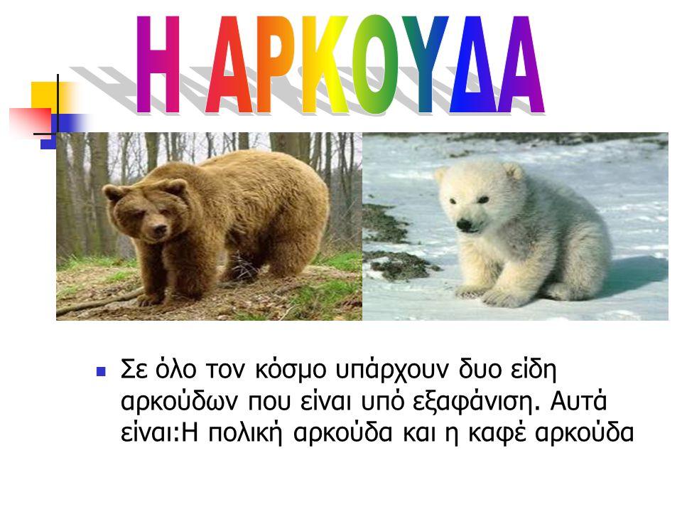  Σε όλο τον κόσμο υπάρχουν δυο είδη αρκούδων που είναι υπό εξαφάνιση.