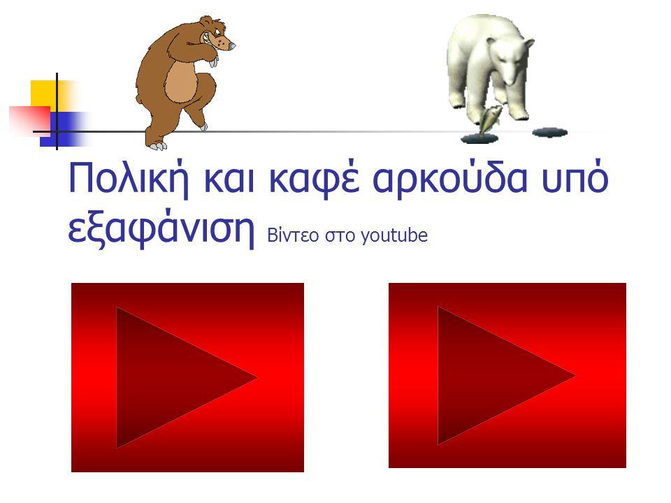 Πολική και καφέ αρκούδα υπό εξαφάνιση Βίντεο στο youtube