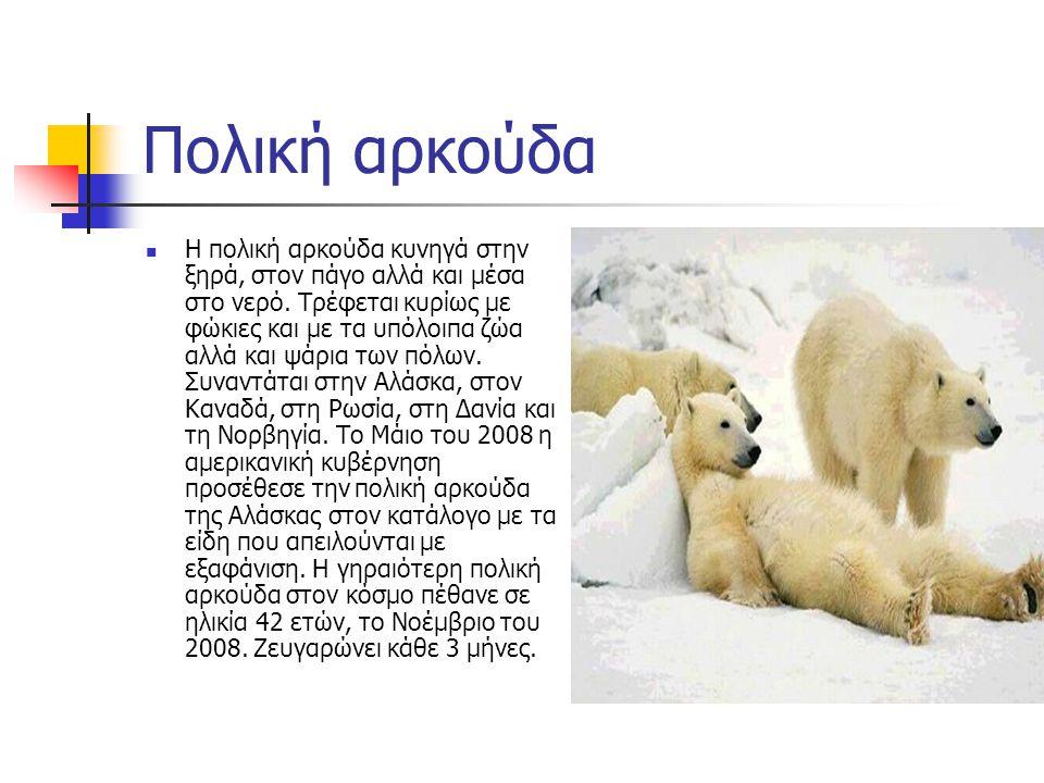 Η έλλειψη πολικών αρκούδων  H πολική αρκούδα στην Αλάσκα είναι είδος που κινδυνεύει με εξαφάνιση κυρίως λόγω του λιώσιμου των πάγων στην Αρκτική και χρειάζεται ειδική προστασία για τη διατήρησή της, όπως ανακοίνωσαν οι ΗΠΑ.