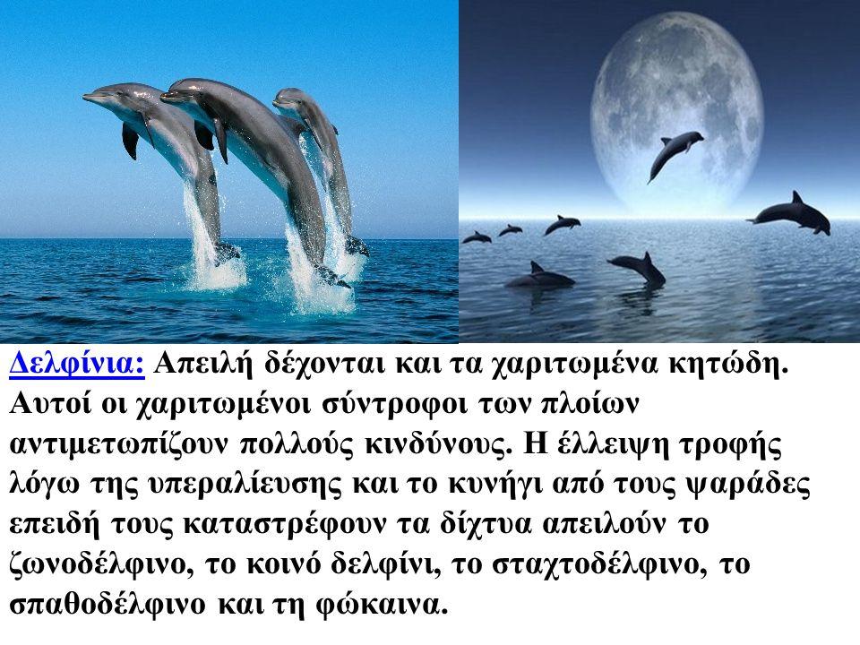 Δελφίνια:Δελφίνια: Απειλή δέχονται και τα χαριτωμένα κητώδη. Αυτοί οι χαριτωμένοι σύντροφοι των πλοίων αντιμετωπίζουν πολλούς κινδύνους. Η έλλειψη τρο