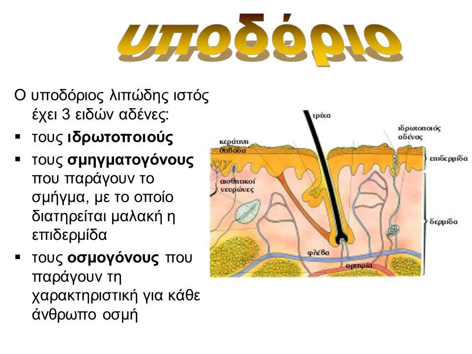 Ο υποδόριος λιπώδης ιστός έχει 3 ειδών αδένες:  τους ιδρωτοποιούς  τους σμηγματογόνους που παράγουν το σμήγμα, με το οποίο διατηρείται μαλακή η επιδερμίδα  τους οσμογόνους που παράγουν τη χαρακτηριστική για κάθε άνθρωπο οσμή