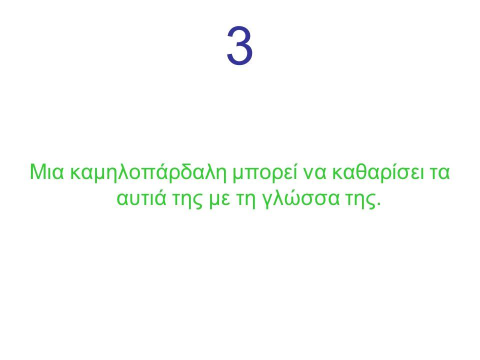 3 Μια καμηλοπάρδαλη μπορεί να καθαρίσει τα αυτιά της με τη γλώσσα της.