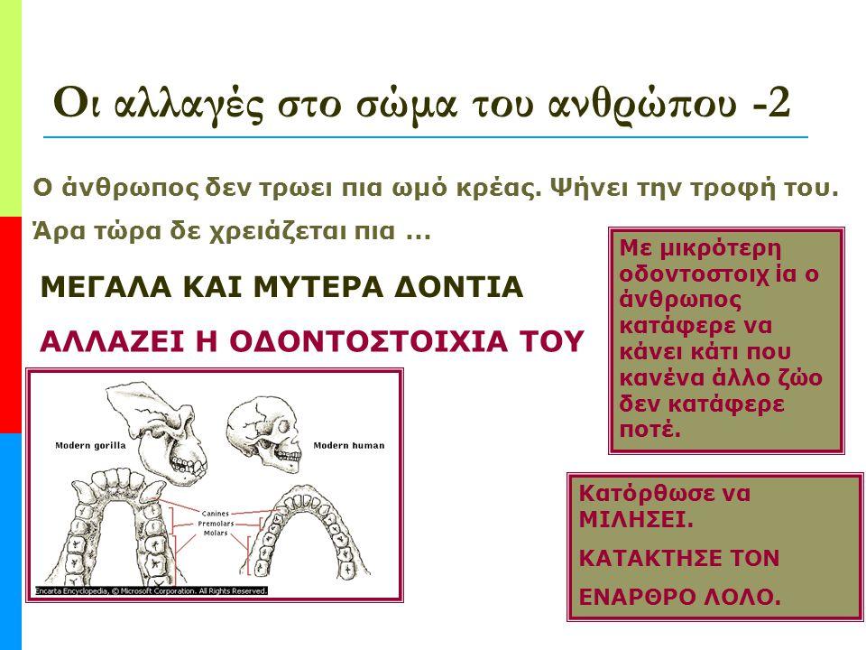Οι αλλαγές στο σώμα του ανθρώπου - 1 Η ανακάλυψη της φωτιάς δεν αλλάζει μόνο τη ζωή του ανθρώπου. Αλλάζει το ίδιο του το σώμα! Παρατήρησε τις πιο κάτω