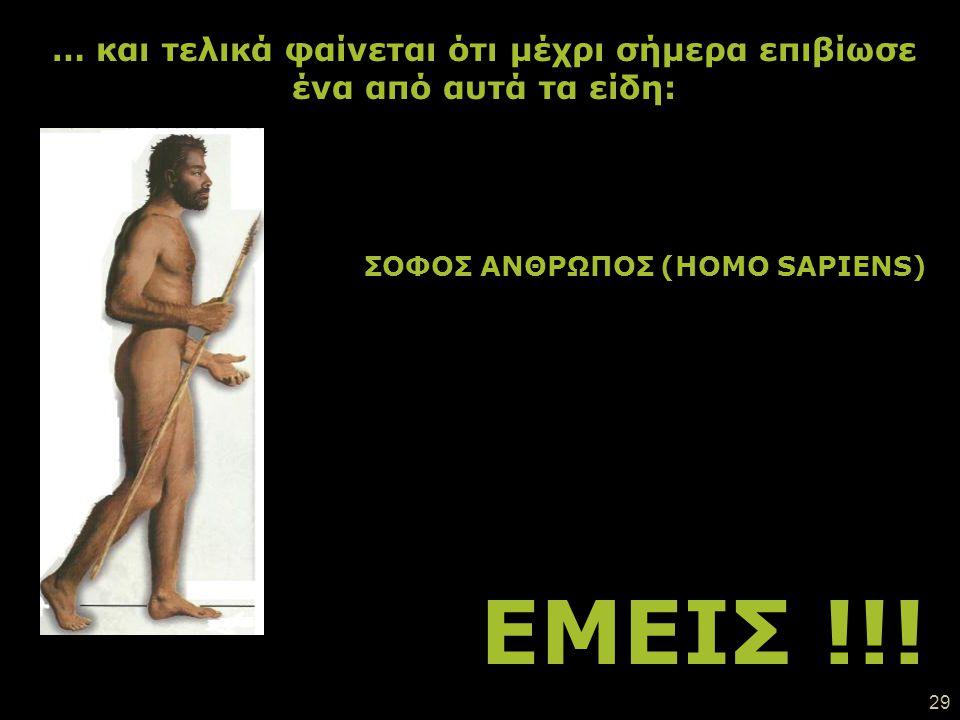 28 Οι σοφοί άνθρωποι (Homo Sapiens) μπορούν να μιλούν, να κατασκευάζουν περίπλοκα εργαλεία και να φτιάχνουν έργα τέχνης. Ήταν ψηλότεροι από όλους τους