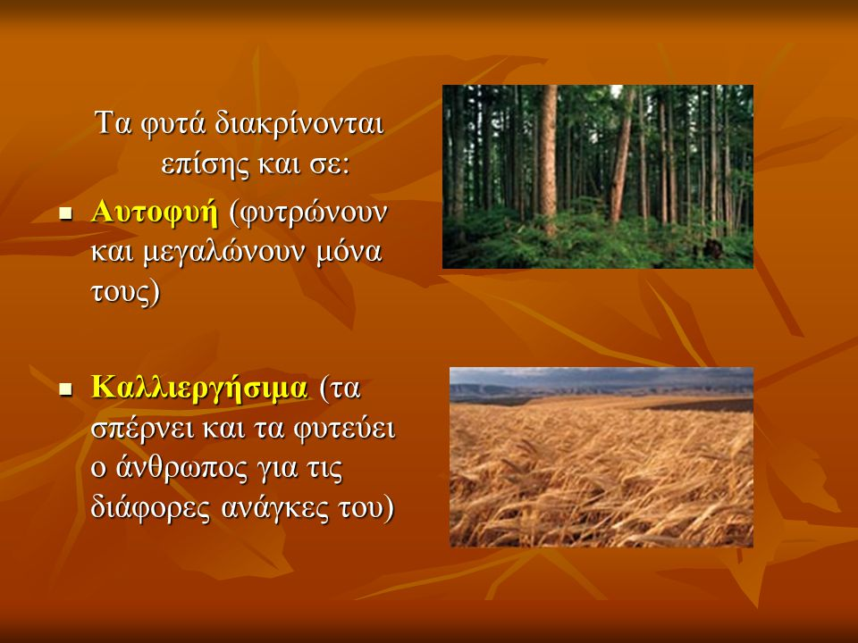 Τα φυτά διακρίνονται επίσης και σε:  Αυτοφυή (φυτρώνουν και μεγαλώνουν μόνα τους)  Καλλιεργήσιμα (τα σπέρνει και τα φυτεύει ο άνθρωπος για τις διάφο