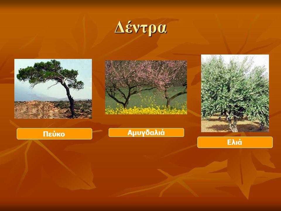 Δέντρα Πεύκο Ελιά Αμυγδαλιά