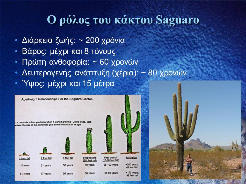 Ο ρόλος του κάκτου Saguaro •Διάρκεια ζωής: ~ 200 χρόνια •Βάρος: μέχρι και 8 τόνους •Πρώτη ανθοφορία: ~ 60 χρονών •Δευτερογενής ανάπτυξη (χέρια): ~ 80