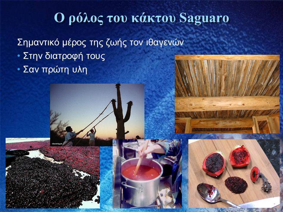 Ο ρόλος του κάκτου Saguaro Σημαντικό μέρος της ζωής τον ιθαγενών • Στην διατροφή τους • Σαν πρώτη υλη