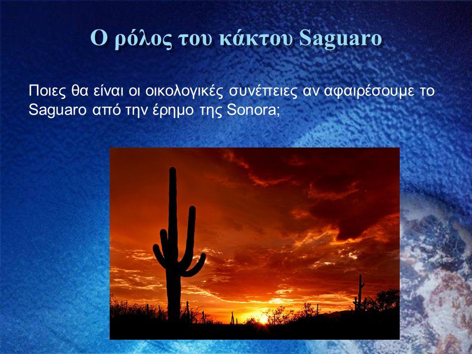 Ο ρόλος του κάκτου Saguaro Ποιες θα είναι οι οικολογικές συνέπειες αν αφαιρέσουμε το Saguaro από την έρημο της Sonora;