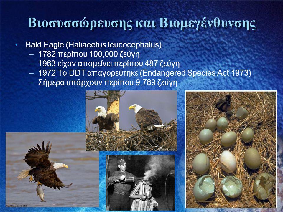 Βιοσυσσώρευσης και Βιομεγένθυνσης •Bald Eagle (Haliaeetus leucocephalus) –1782 περίπου 100,000 ζεύγη –1963 είχαν απομείνει περίπου 487 ζεύγη –1972 Το
