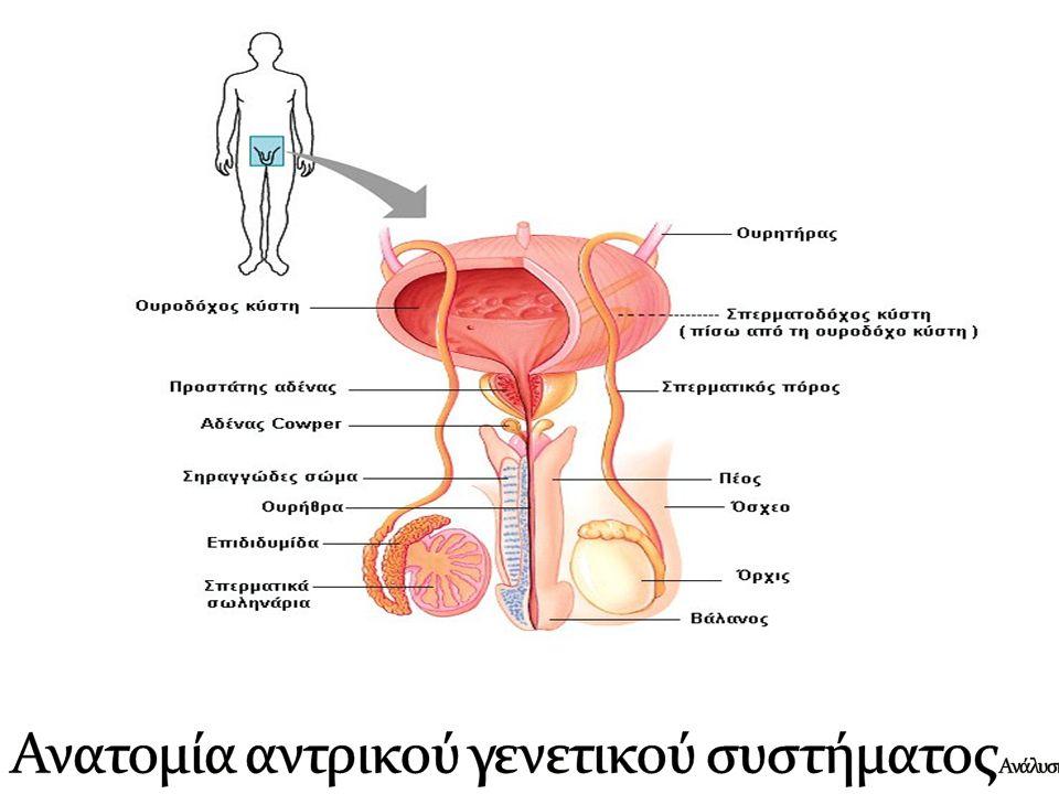  Είναι αδένας που υπάρχει μόνο στο γεννητικό σύστημα των ανδρών.