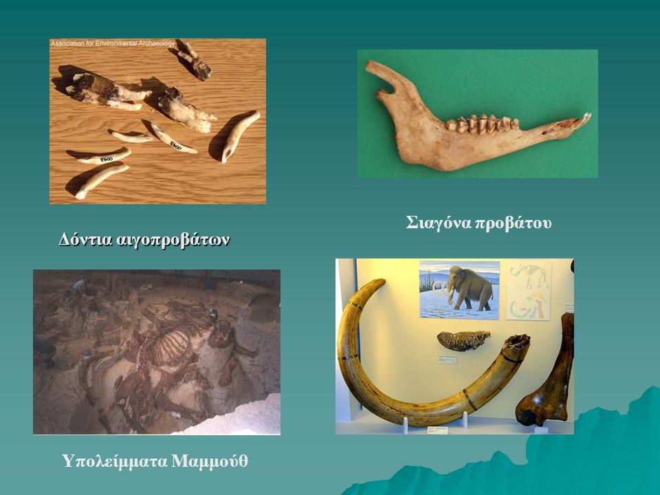 Δόντια αιγοπροβάτων Σιαγόνα προβάτου Υπολείμματα Μαμμούθ