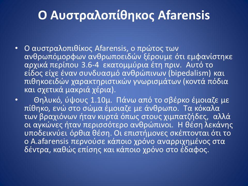 Ο Αυστραλοπίθηκος Afarensis • Ο αυστραλοπιθίκος Afarensis, ο πρώτος των ανθρωπόμορφων ανθρωποειδών ξέρουμε ότι εμφανίστηκε αρχικά περίπου 3.6-4 εκατομ