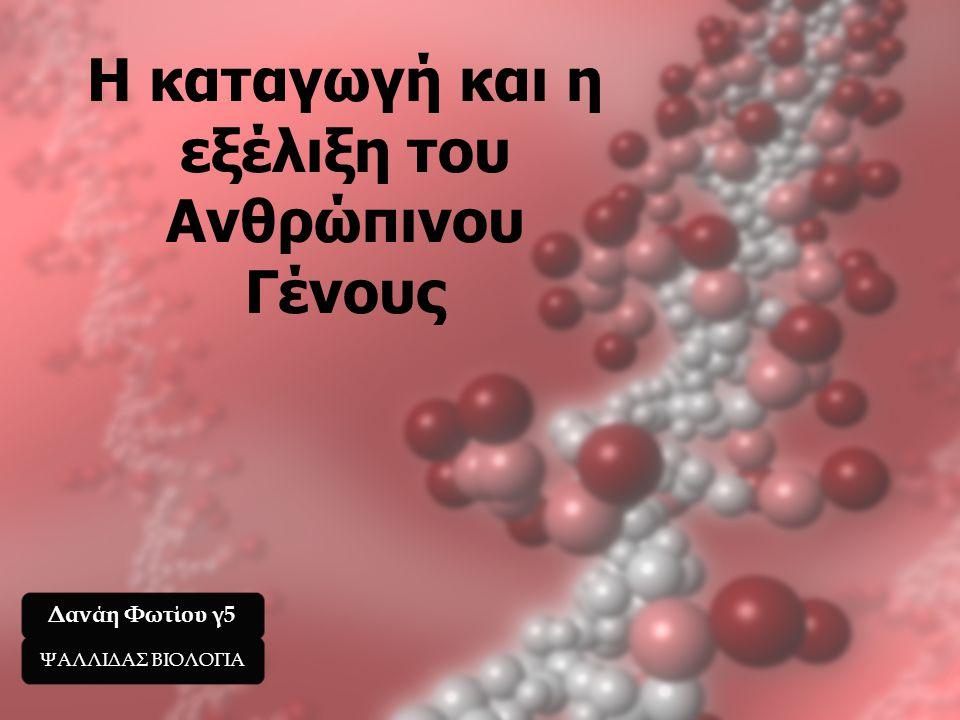 Η καταγωγή και η εξέλιξη του Ανθρώπινου Γένους Δανάη Φωτίου γ5 ΨΑΛΛΙΔΑΣ ΒΙΟΛΟΓΙΑ