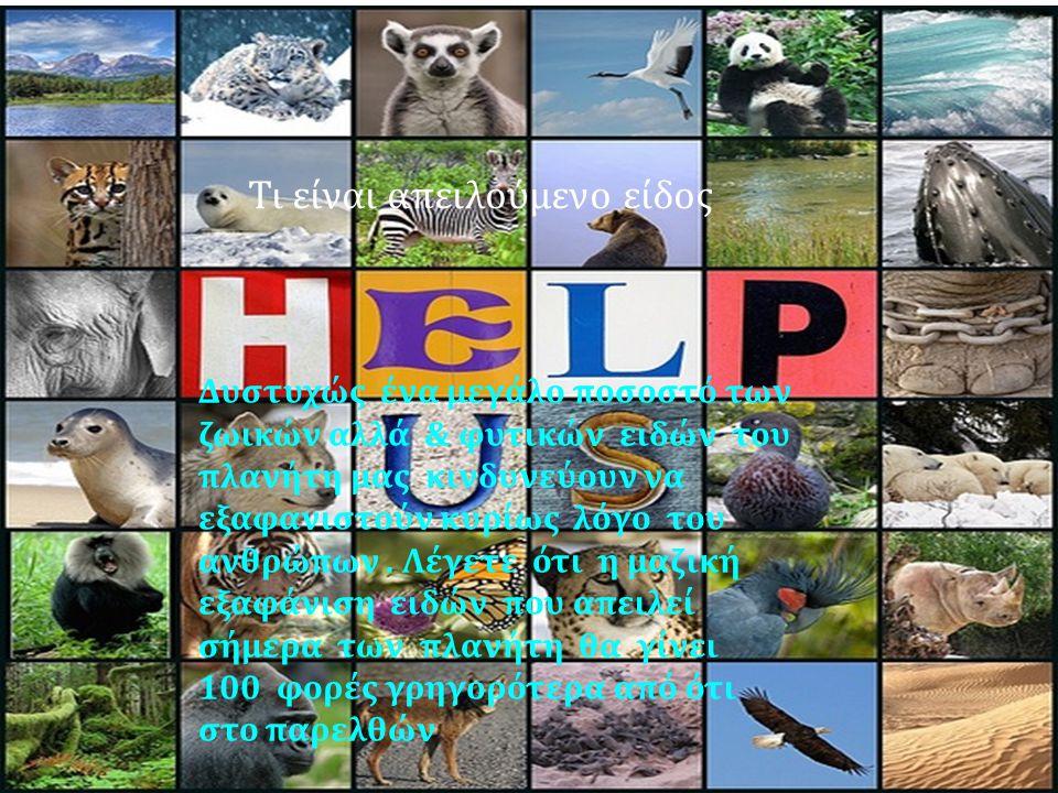 Δυστυχώς ένα μεγάλο ποσοστό των ζωικών αλλά & φυτικών ειδών του πλανήτη μας κινδυνεύουν να εξαφανιστούν κυρίως λόγο του ανθρώπων.