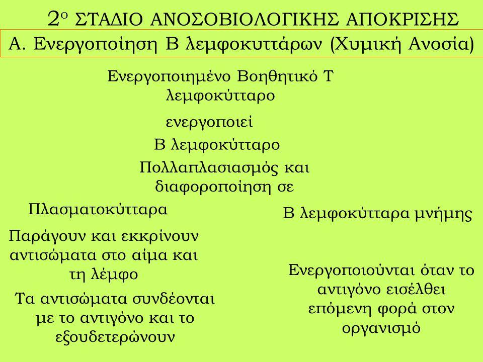 2 ο ΣΤΑΔΙΟ ΑΝΟΣΟΒΙΟΛΟΓΙΚΗΣ ΑΠΟΚΡΙΣΗΣ Α.
