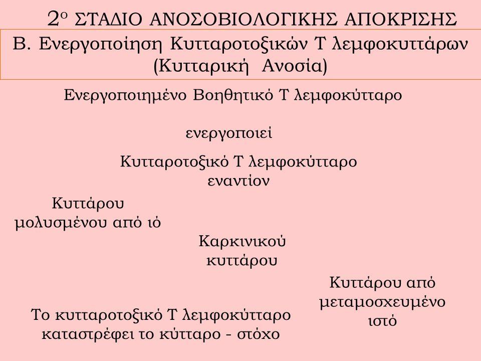 2 ο ΣΤΑΔΙΟ ΑΝΟΣΟΒΙΟΛΟΓΙΚΗΣ ΑΠΟΚΡΙΣΗΣ Β.